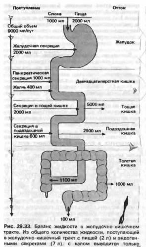 Схема транспорт углеводов в